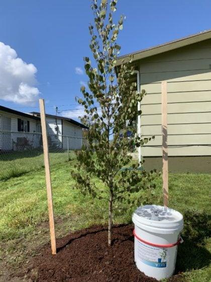 Tree Coupon Program
